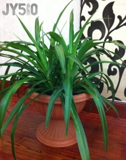 阔叶植物平面图