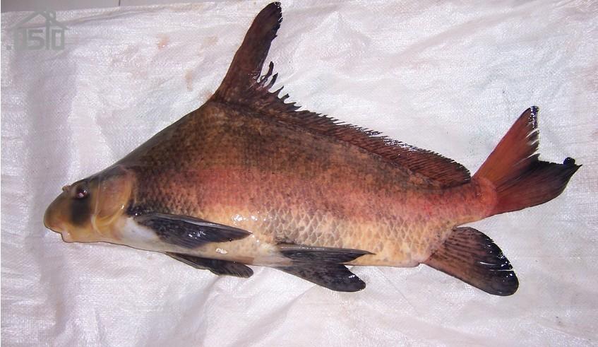 一条奇怪的鱼图片