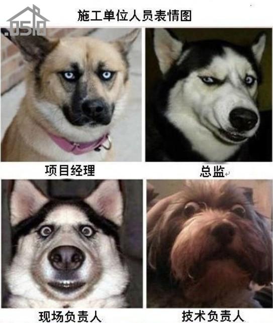 施工单位人员表情图(动物版本)图片