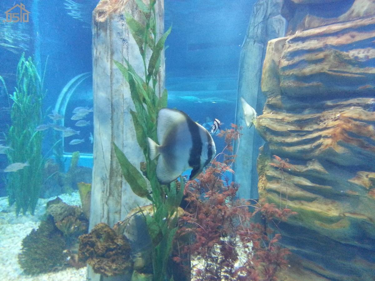 亲子游-----无锡动物园,海洋馆一日游(多图 手机流量党慎入)
