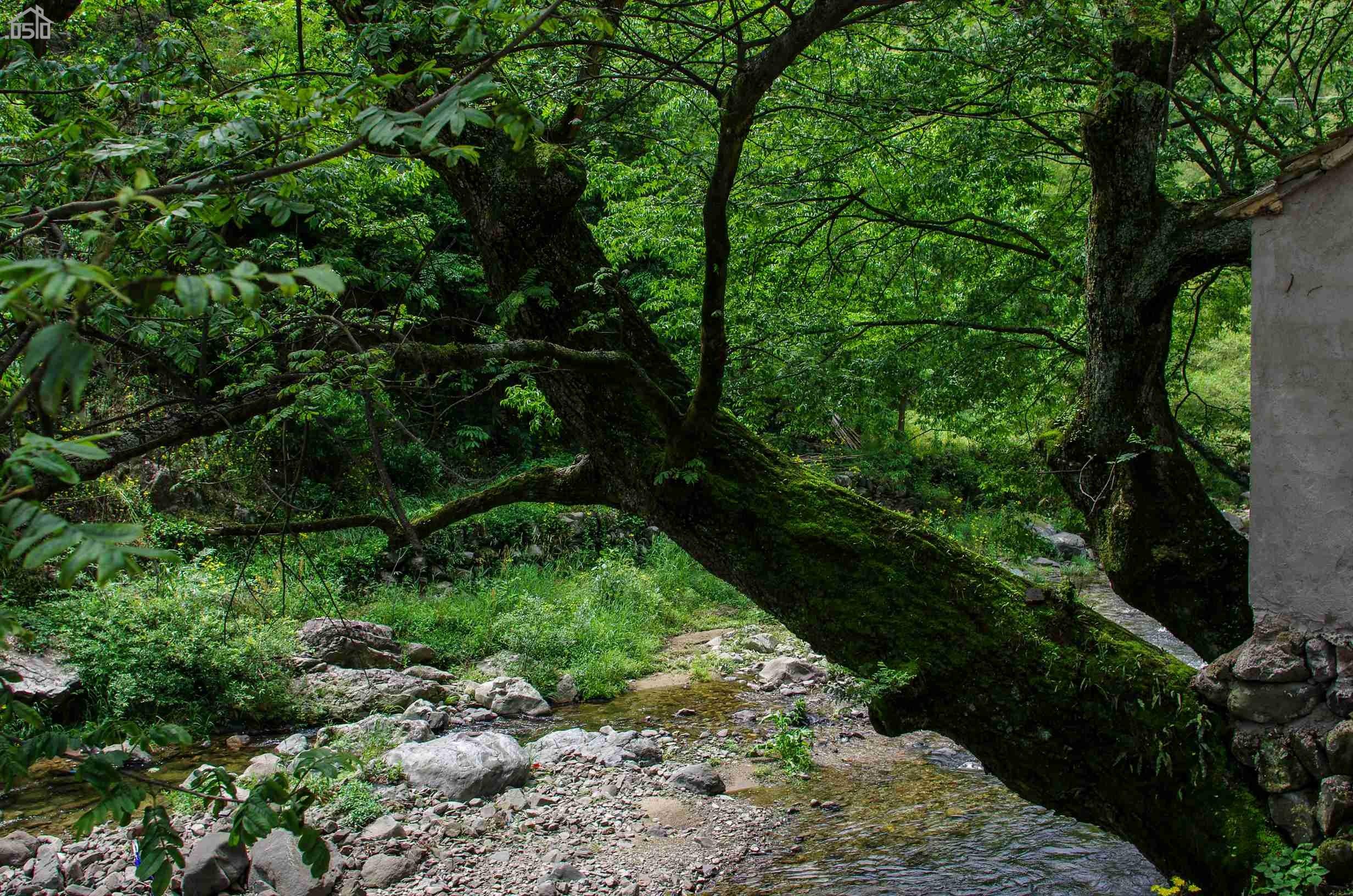 壁纸 风景 森林 桌面 2464_1632