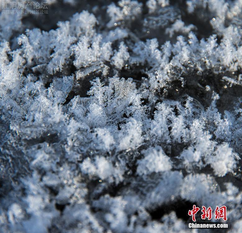 2月19日消息,随着近几日气温变化,在额尔齐斯河新疆北屯段河面上开起了晶莹剔透的冰花,大自然的鬼斧神工将这些冰花雕琢得如此精妙绝伦。满河的冰花与蓝天白云相互交映,让人胸襟开阔,陶醉其中。 据了解,这些冰花形成的时候需要寒冷的天气,空气中水分充足才能在干净的冰面上形成。而额尔齐斯河北屯这条支流距离额河主道近,主道有水流急未冰封的地方,因此水汽充足;这里一年平均气温仅4,一月份平均最低温低达到-21。过冷的饱和水汽遇到更冷的光滑冰面,就使得冰面上慢慢长出了冰花,然后越长越多就能将冰面覆盖